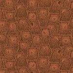Bear Huddle in Sienna